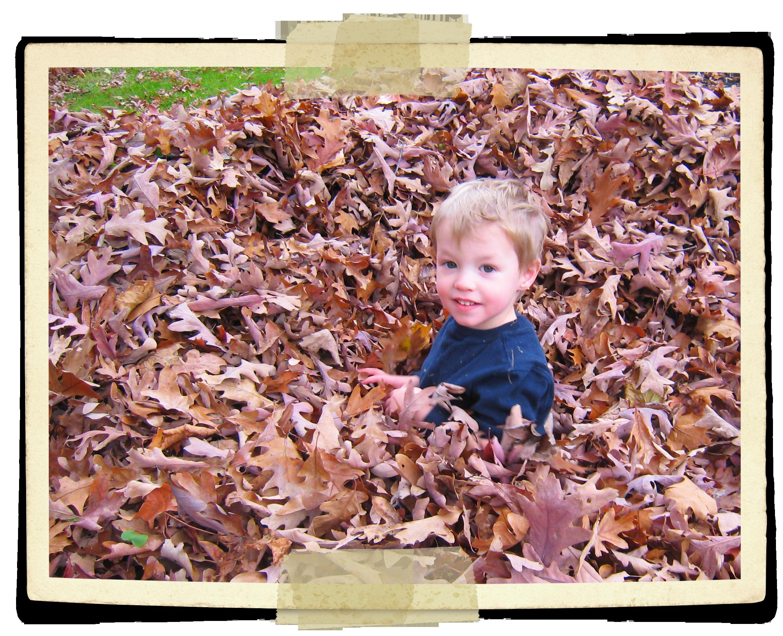 Wake up leaves